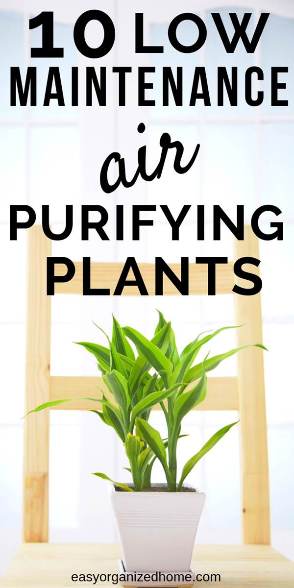 10 indoor plant ideas that require low light but that are super healthy to have at home, they purify your house's air. #plants #indoorplants #houseplantclub #houseplantslowlight #houseplantsairpurifying #airpurifier #airpurifyingplants #indoorhouseplants #houseplantclub #airdetox