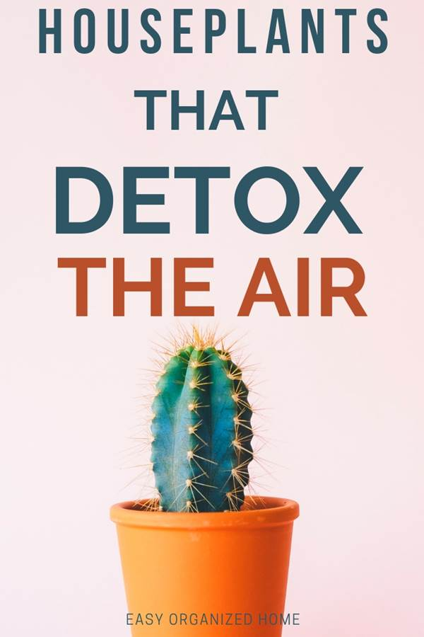 Indoor plants that remove toxins from the air, catch and digest mold, naturally humidify and decorate your home or office. Perfect for a healthier environment to combat asthma and allergies. #plants #indoorplants #houseplantclub #houseplantslowlight #houseplantsairpurifying #airpurifier #airpurifyingplants #indoorhouseplants #houseplantclub #airdetox