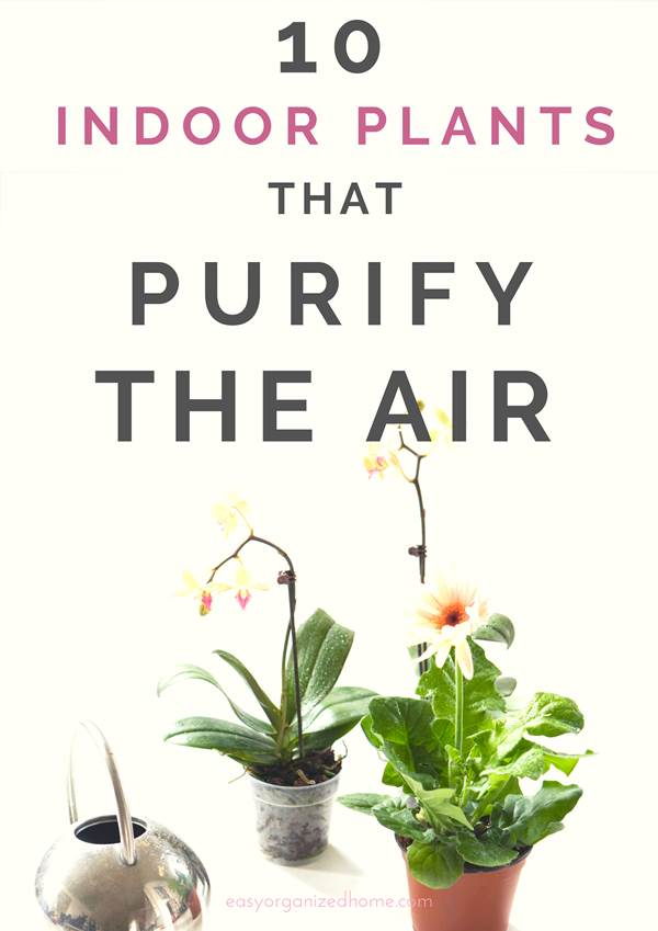 List of best plants to clean the air from apartments, houses and offices. Pet friendly and low maintenance indoor plants. #plants #indoorplants #houseplantclub #houseplantslowlight #houseplantsairpurifying #airpurifier #airpurifyingplants #indoorhouseplants #houseplantclub #airdetox