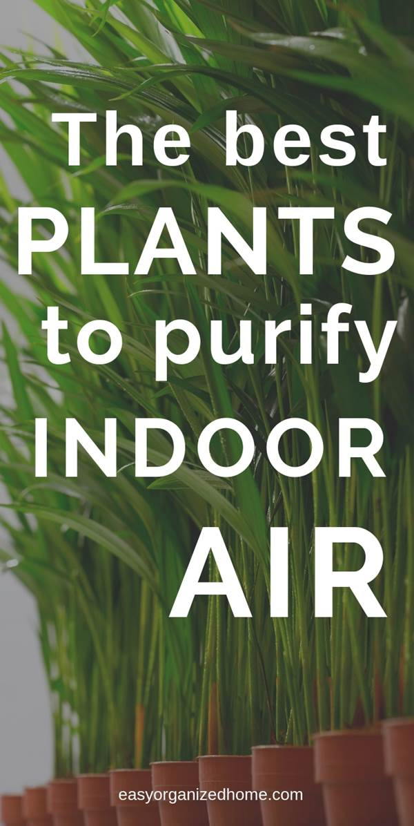 The best plants for houses, apartments and offices that are low maintenance and purify the air. The best air detox houseplants. #plants #indoorplants #houseplantclub #houseplantslowlight #houseplantsairpurifying #airpurifier #airpurifyingplants #indoorhouseplants #houseplantclub #airdetox